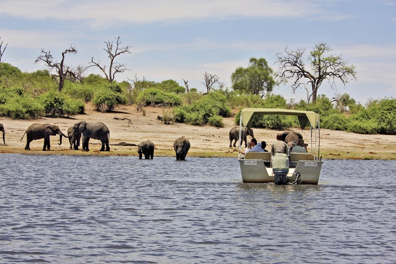 Elephant Valley Lodge Tiere