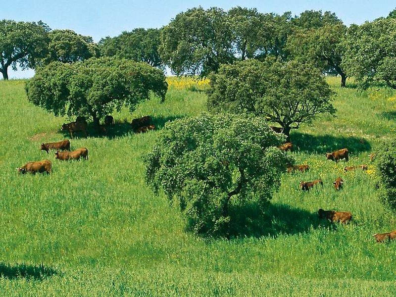 Herdade da Malhadinha Nova Landschaft