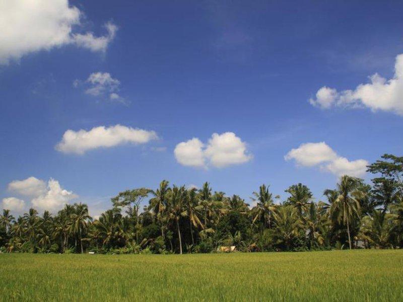 Junjungan Ubud Hotel & Spa Landschaft