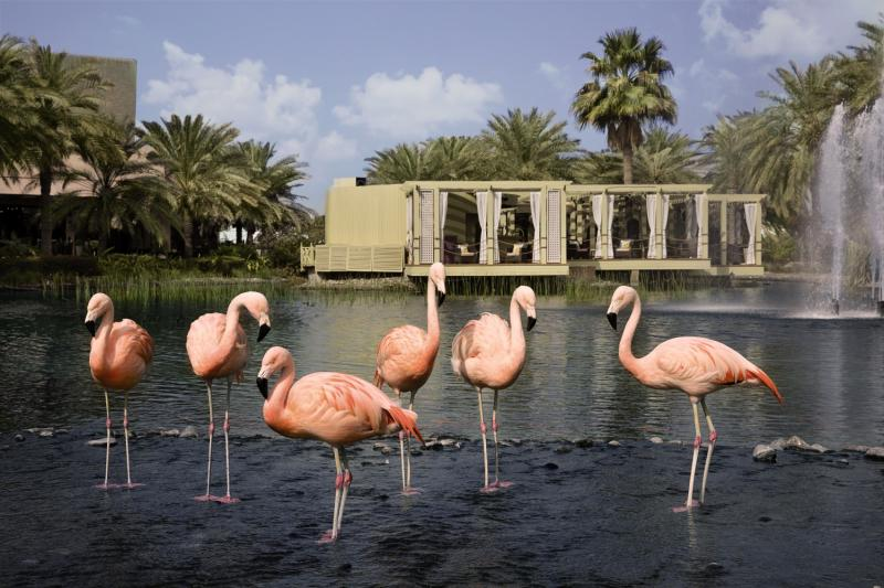 The Ritz Carlton, Bahrain Hotel & Spa Tiere