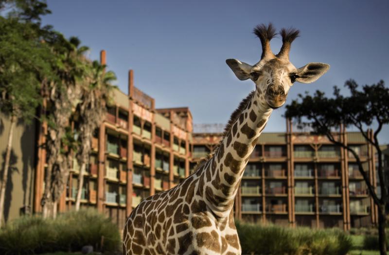 Disney´s Animal Kingdom Lodge Tiere