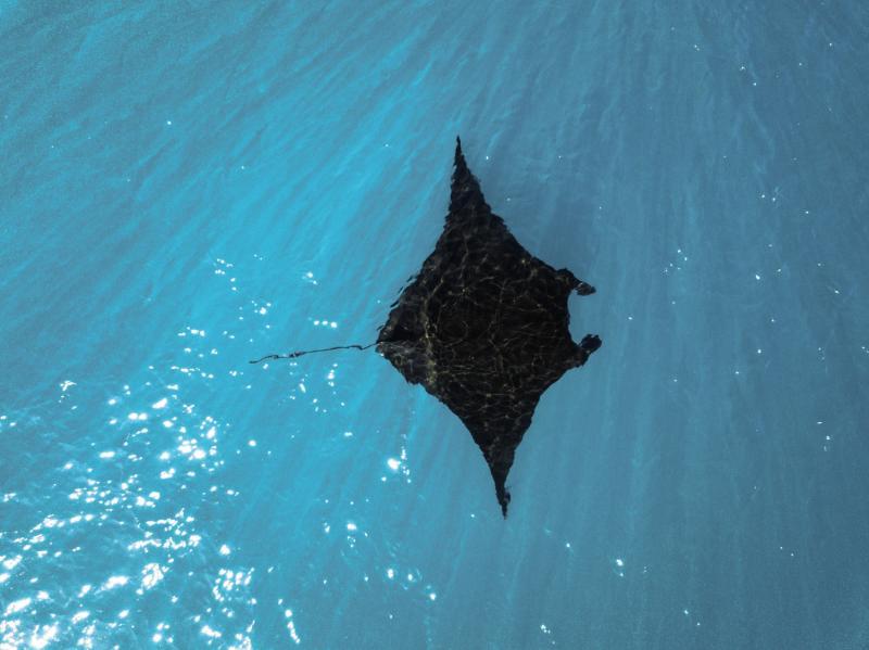 Orpheus Island Resort Tiere